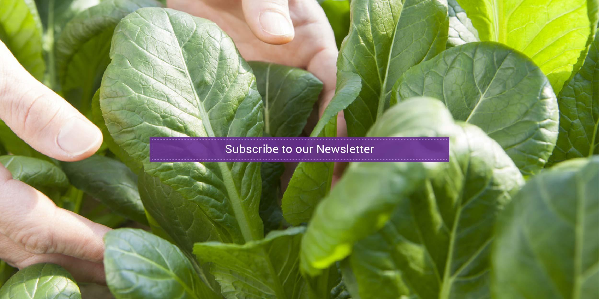 My Nona's GardenNewsletter