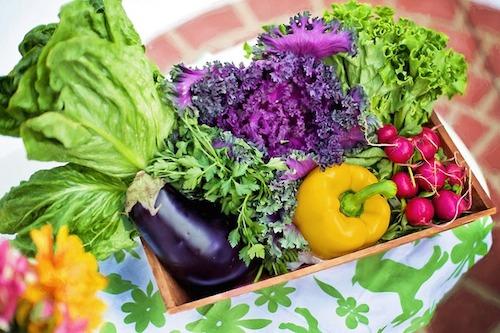Organic Gardening vs. Indoor